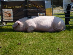 Chillaxing at the South of England Show.
