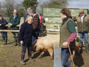 Judityh Sims shows off the points to look for when selecting pedigree stock.