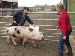 Alice Herbert has a go at walking a pig.