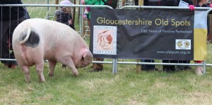 First outing for the new banners at South Suffolk Show