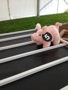 A competitor in the mini pig racing!