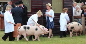Sarah Whitley took the supreme Interbreed Championships at this year's Great Yorkshire Show for the best pair of pigs.