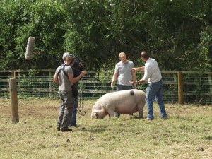 Adam Henson talking to john Lightfoot about his breeding stock