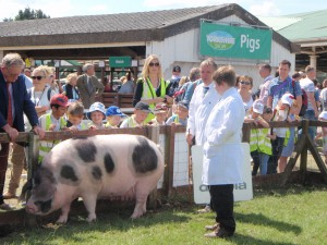 Brian & son Niall Kelly from NI with Forthill Ellen  - the supreme GOS Champion