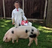 Ella with her rosette & pig at Stafford for best young handler 2015