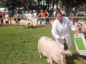 Teresa Cook trys to keep Buckenham Dolly 3 on track