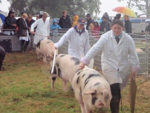 GOS show in the rain at Ryedale 2015