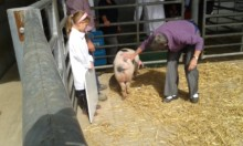 Taya Whiting looks on as her pig is judged