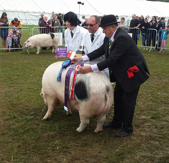 Southern Champion 2015 Cosscoombe Primrose