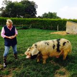 Gerry the oldest Boar at 11yrs old says Hi to owner Mandy