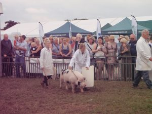 Mandy Garbutt backed by Sarah Whitley with Fowgill Rufus 156